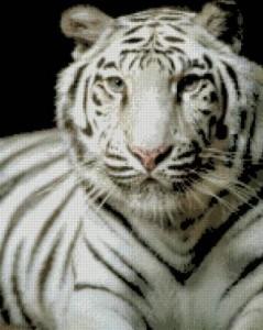 Схема Белый тигр