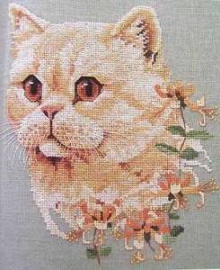 Схема Кошка экзотическая короткошерстная