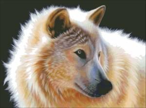 Схема Белый волк