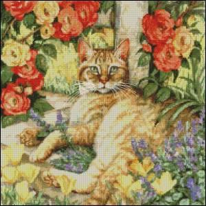 Схема Кот в саду