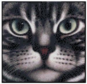 Схема Портрет кота (American Shorthair)
