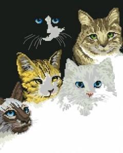 Схема Кошачьи глазки