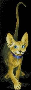 Схема Породистый котенок (черный фон)