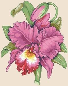 Схема Орхидея (с капелькой)