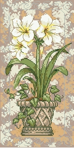 Схема Амариллис в цвету