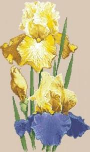 Схема Желтые ирисы