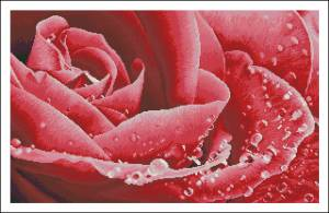 Схема Роза