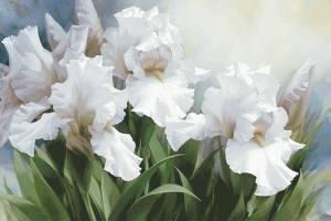 Схема Белые ирисы / White Irise Elegance