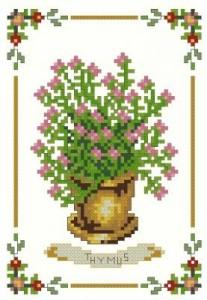 Схема Тимьян / Thymus