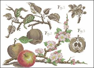 Схема Яблоки