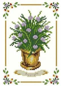 Схема Чеснок / Allium