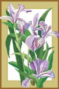 Схема Фиолетовые ирисы