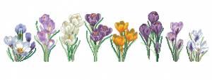 Схема Многообразие крокусов / Crocus Varieties