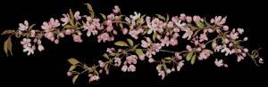 Схема Японские цветы на черном / Japanese Blossom Black