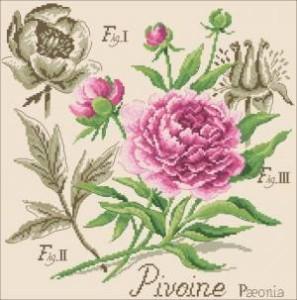 Схема Пион