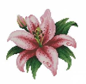 Схема Розовая лилия с капелькой росы