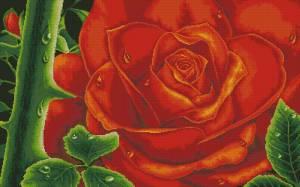 Схема Красная колючая роза