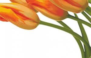 Схема Пять тюльпанов