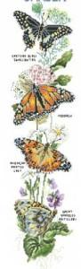 Схема Садовые бабочки / Garden butterfly