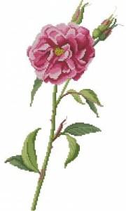 Схема Элегантная роза