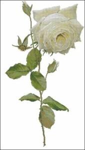 Схема Белая роза
