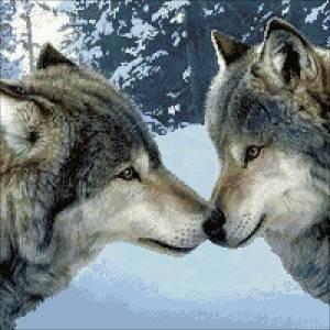 Схема Пара волков