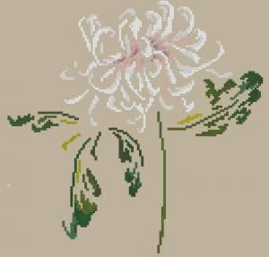 Схема Нежная хризантема