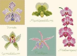 Схема Орхидеи ассорти