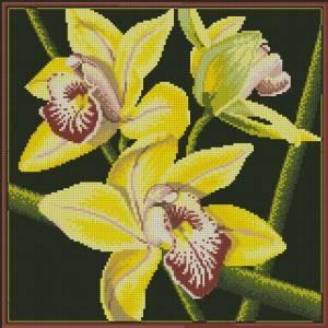 Схема Орхидея / Cymbidium