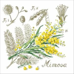 Схема Мимоза