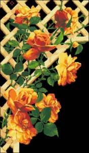 Схема Каприз (розы)