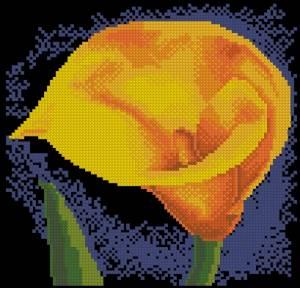 Схема Желтая калла