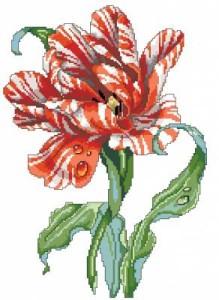 Схема Тюльпан тигровый