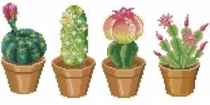 Схема 4 кактуса