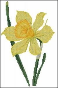 Схема Нарцисс