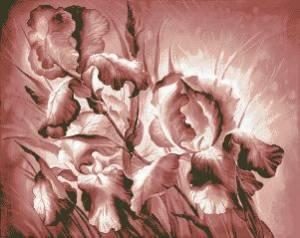 Схема Ирисы в розовом