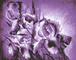 Схема Ирисы в лиловом