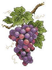 Схема Виноград на лозе