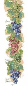 Схема Виноград (панель)