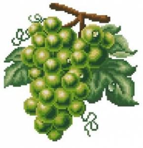 Схема Виноград зеленый