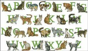"""Схема Алфавит """"Кошки"""""""