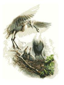 Схема Семья в гнезде