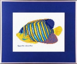 Схема Цветная рыбка желто-голубая