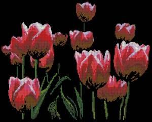 Схема C любовью. Тюльпаны