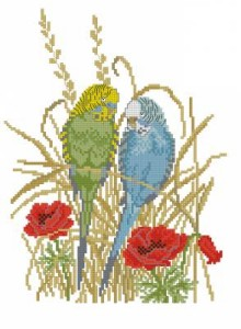 Схема Волнистые попугаи