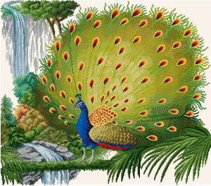 Схема Павлин / Peacock
