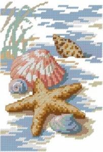 Схема Ракушки на берегу