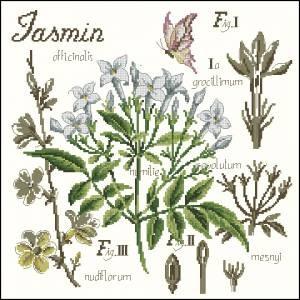 Схема Жасмин