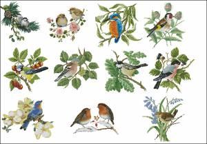 Схема Сэмплер птичий