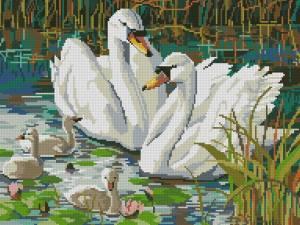 Схема Лебеди. Семья